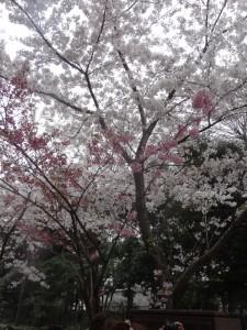 ☆4月スタート★