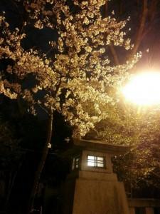 ♡お花見♡